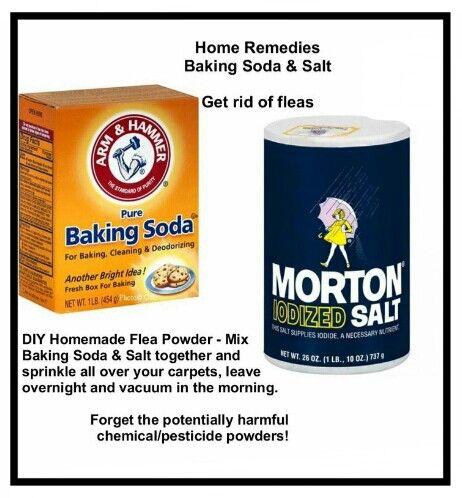 Vist Us For Tips To Get Rid Of Fleas At Http Http Www Boraxforfleas Com Flea Remedies Flea Powder Fleas