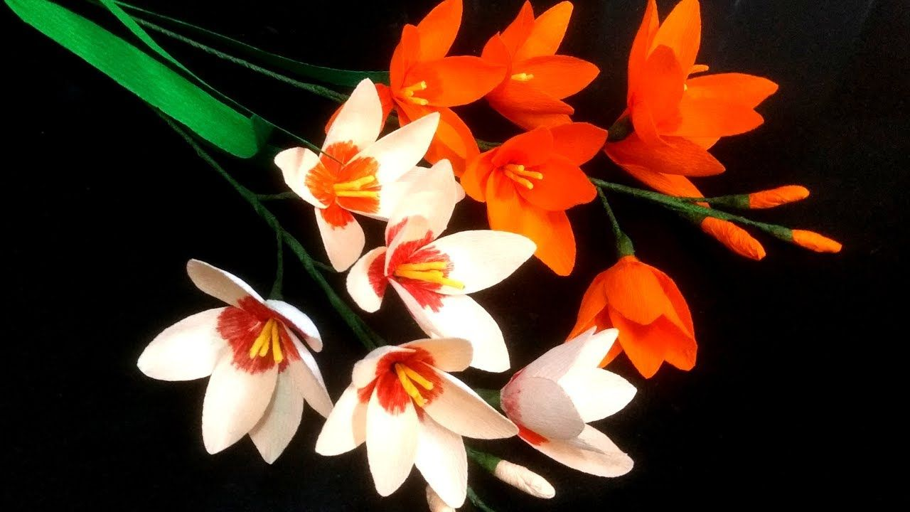 Paper Flower Ixia  African Corn Lily flower    Flores