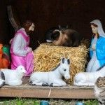 A colony of feral cats in Red Hook, Brooklyn delight passersby as they share the stage with creche figures in a nativity scene.