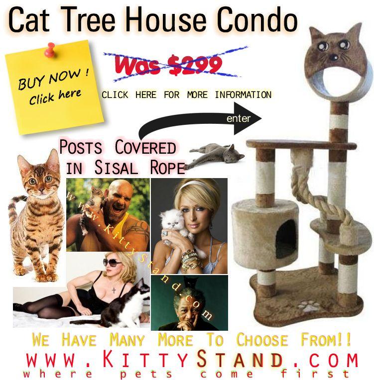 Park Art My WordPress Blog_Kittens For Sale Craigslist Az
