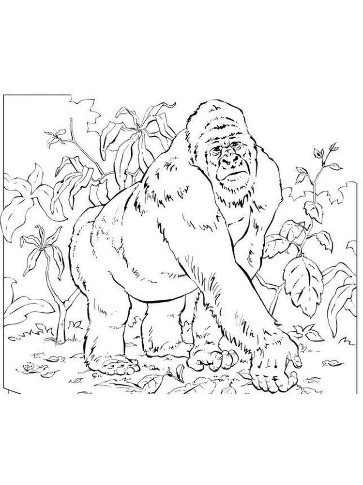 Gorilla Coloring book Colouring Pages Child, gorilla, white ... | 1000x750