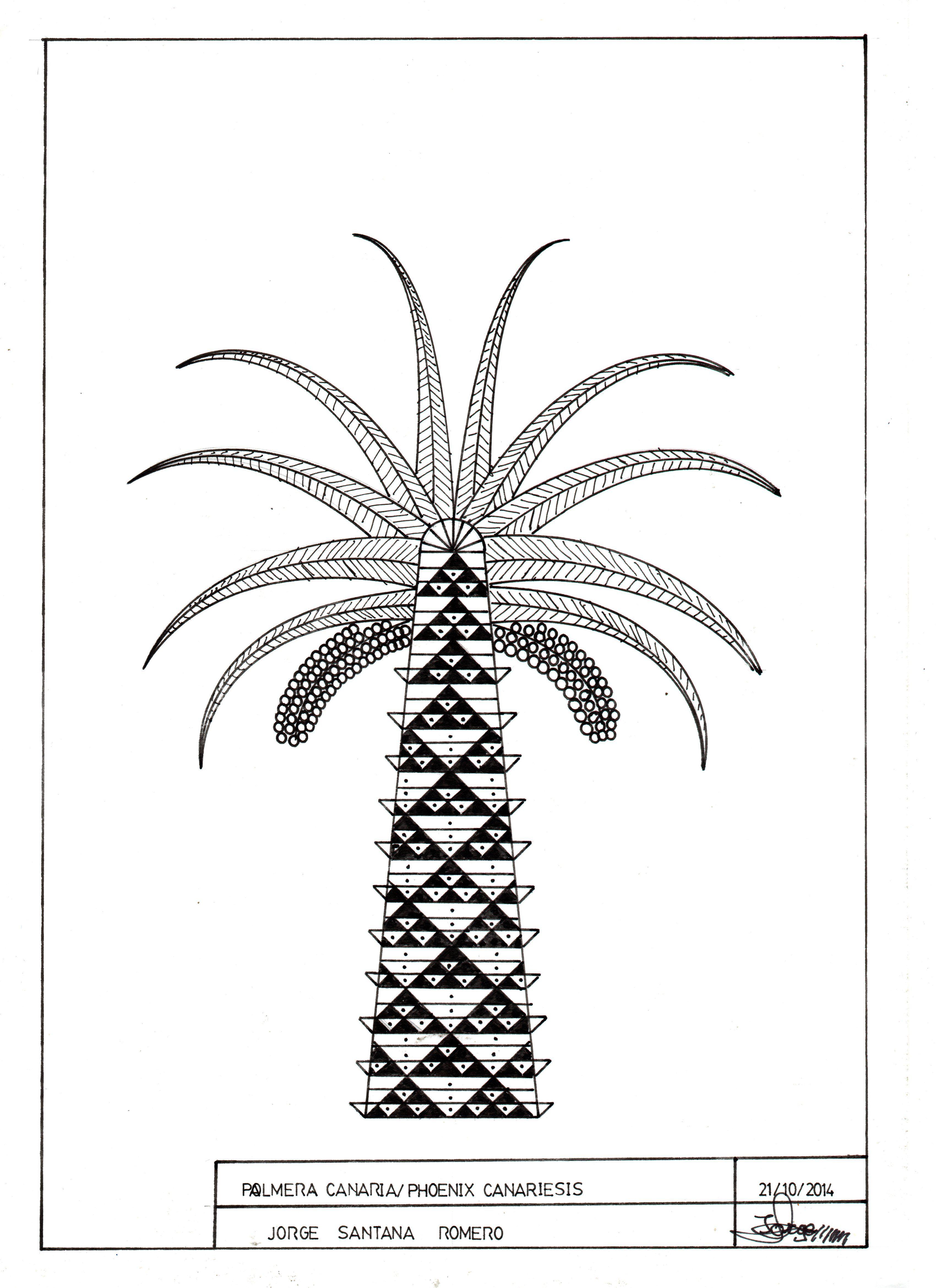 Obra : La Palmera Canaria   Dibujos estilografos   Pinterest ...