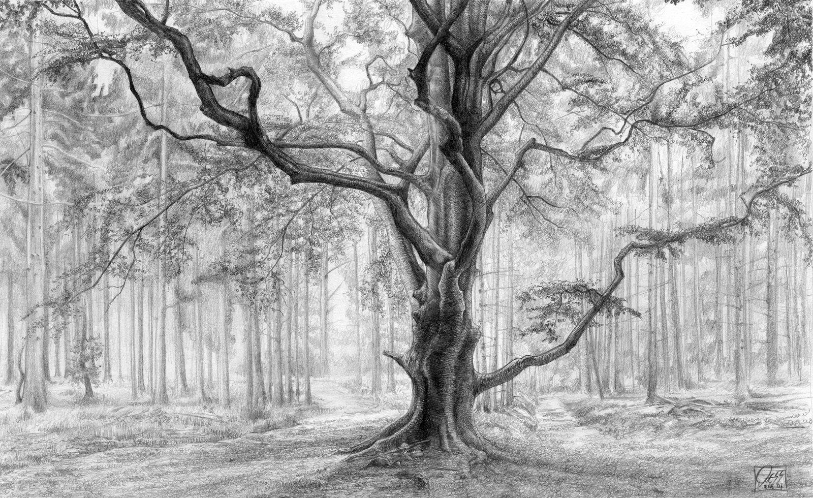 зеленых дерево в лесу рисунок карандашом нежное злаковое