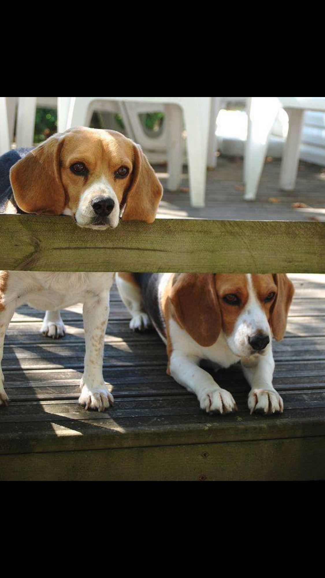 You Take The High View I Ll Take The Low Beagles Cute