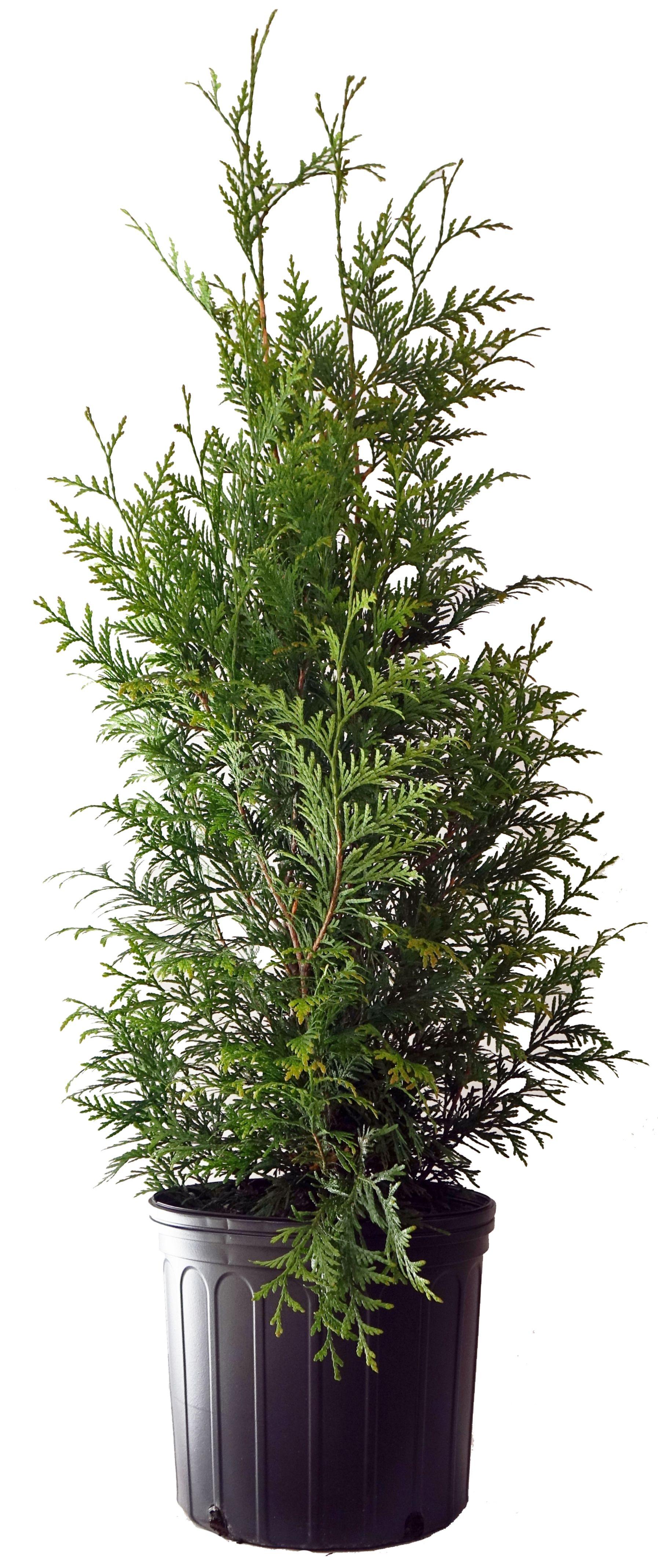 Mature plants fast photos 268