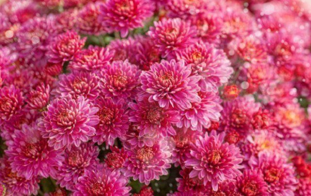 огород цветет