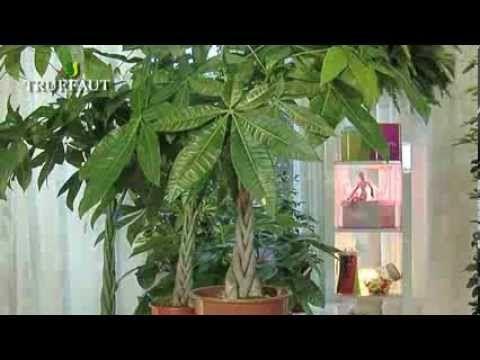 L 39 entretien d 39 une plante verte d 39 int rieur n 39 aura plus de for Secret d interieur