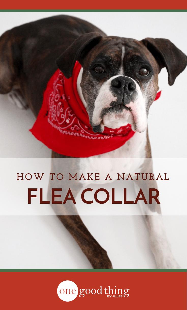 Homemade Dog Flea Collar With Essential Oils Flea Collar Essential Oils Dogs Fun To Be One
