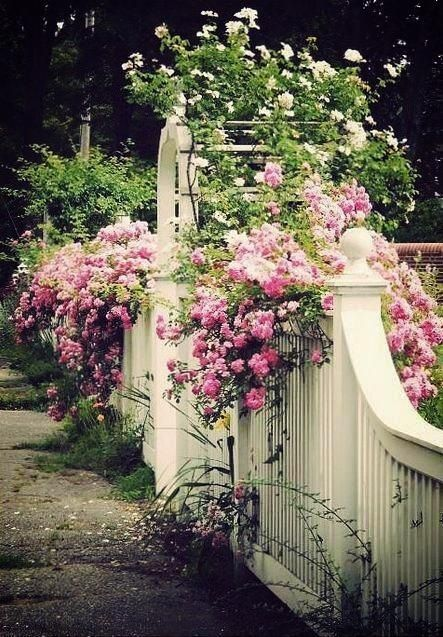 Beautiful fence and flowers Home for the Memories Pinterest
