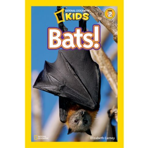 Discover the bat's unique place in the wild and in the world.