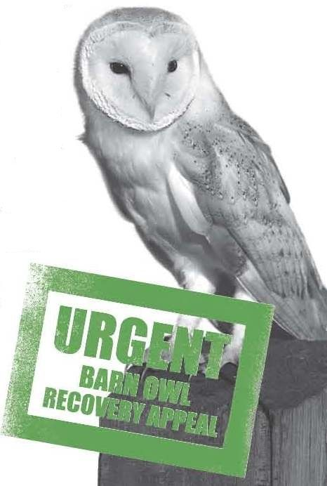 ELLIE HARRISON LAUNCHES APPEAL TO PROTECT BARN OWLS | Gloucestershire Wildlife Trust