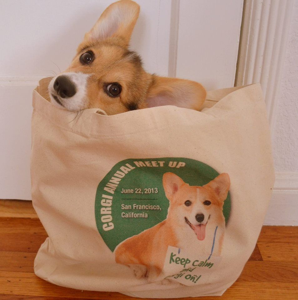 It S A Bag Full Of Cuteness What An Adorable Corgi Puppy Dog See