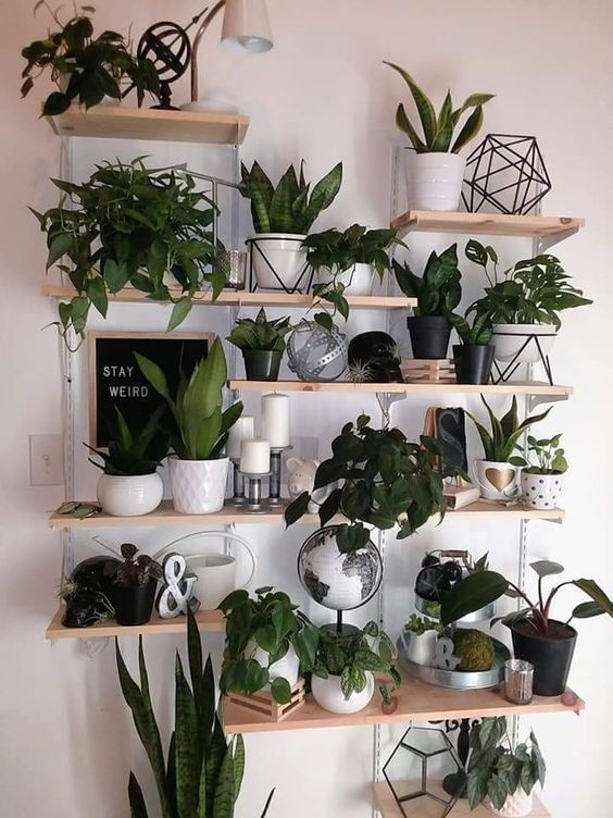 large houseplants, plant wall, wall decor, DIY plant decor wall, living room decor, interior decoration. - Furnishing ideas#decor #decoration #diy #furnishing #houseplants #ideas #interior #large #living #plant #room #wall