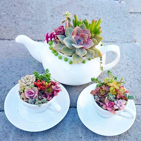 Quem deseja um Chá da Tarde assim Levanta a mão ???????? #succulentterrarium