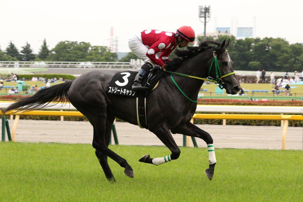 2016-06-04|東京9R 国分寺特別 ストリートキャップ 返し馬