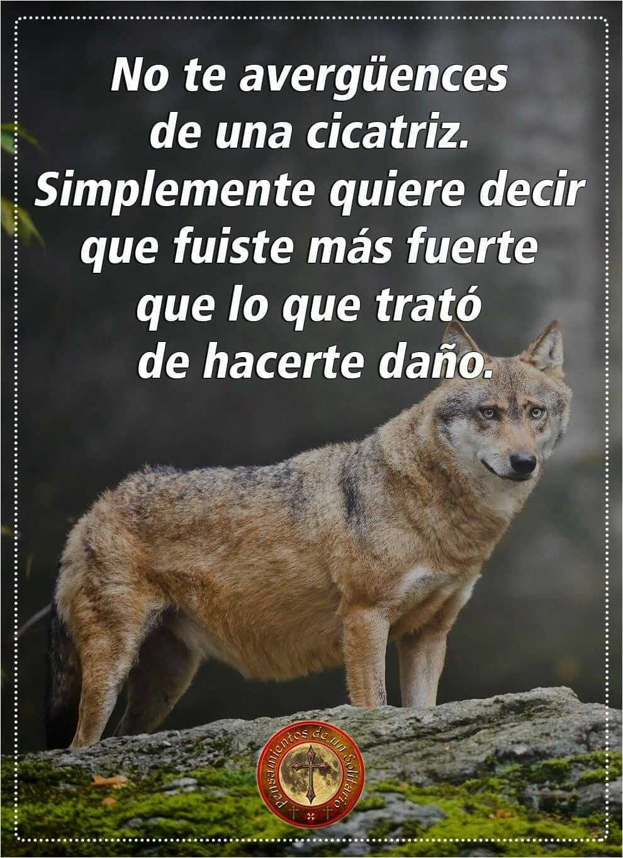 Frases De Lobos Solitarios Imgurl