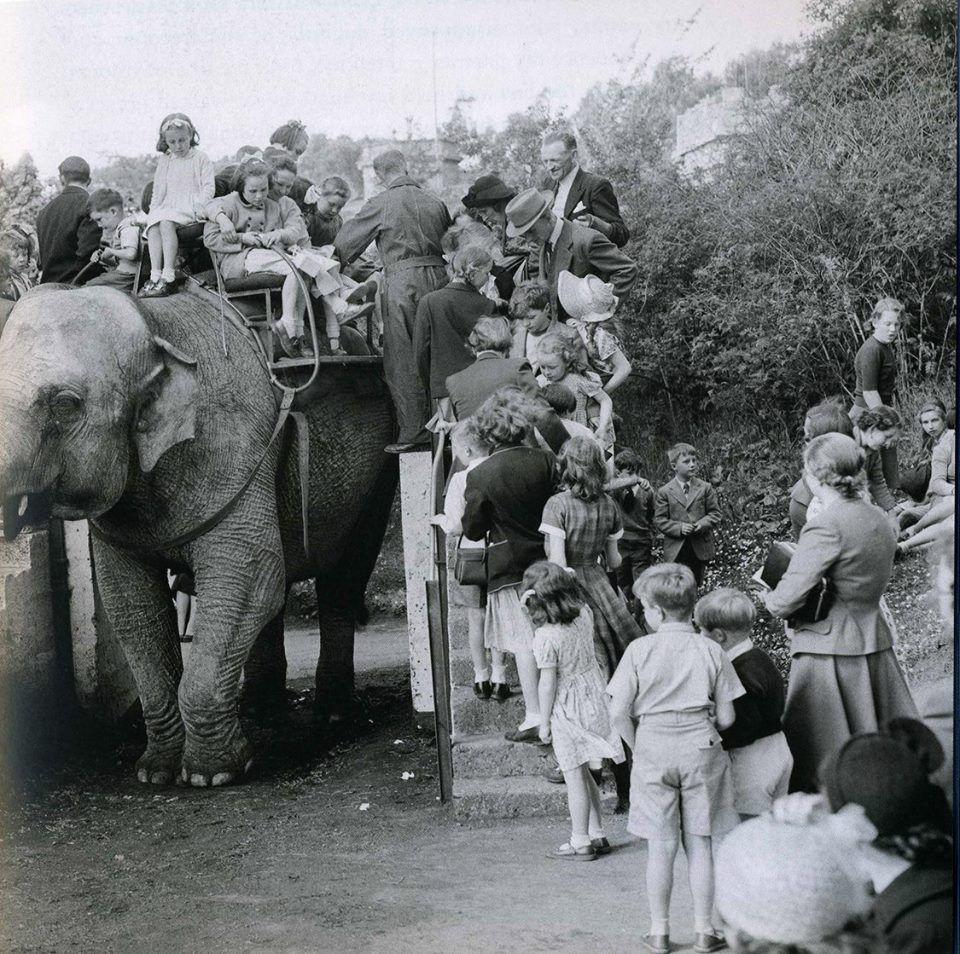 Kids Queuing Up To Get On Sarah The Elephants 50 S At Dublin Zoo Dublin Zoo Irish Heritage Bw Photo