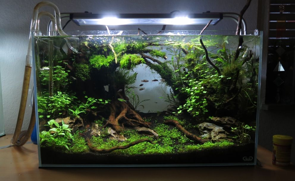 pin von julian fiessler auf aquascaping biotop aquarien. Black Bedroom Furniture Sets. Home Design Ideas