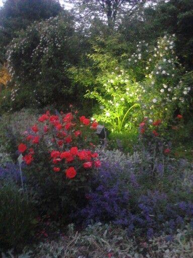 Fancy Meer dan idee n over Botanischer Garten Augsburg op Pinterest Stiefm tterchen pflanzen Hornveilchen en Green miles
