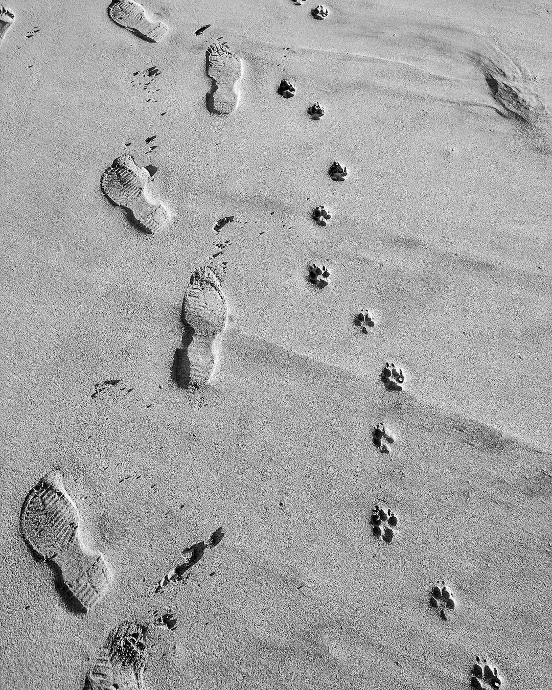 Walking the beach with my best friend. #paws #beach #footprints #sand #pawprints