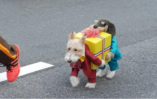 Dog Dressed As Two Dogs Carrying A Present Google Search Dog