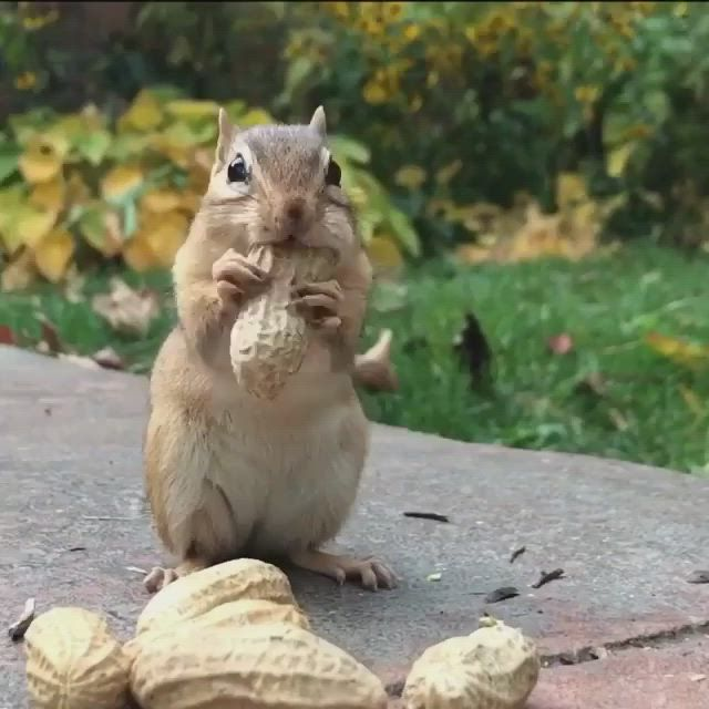 Meet Chico the chipmunk! 🐿 *Watch for the smile! 😀