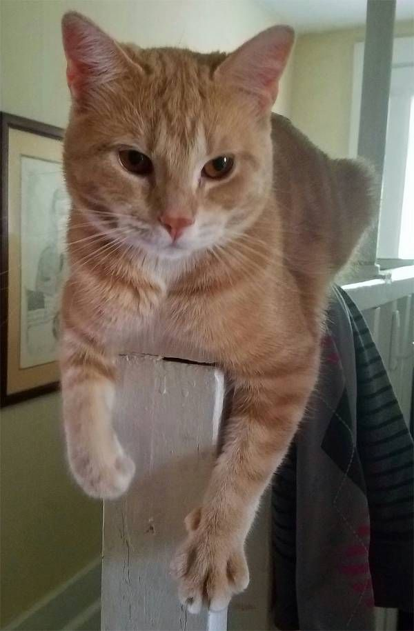 Lost Cat Unknown In Bristol Ct Lostmykitty Com Lost Cat Cats Pet Names