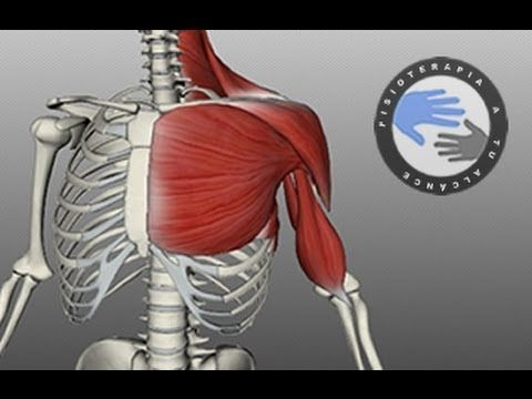 Anatomía del hombro / Fisioterapia a tu alcance | fisioterapeuta ...