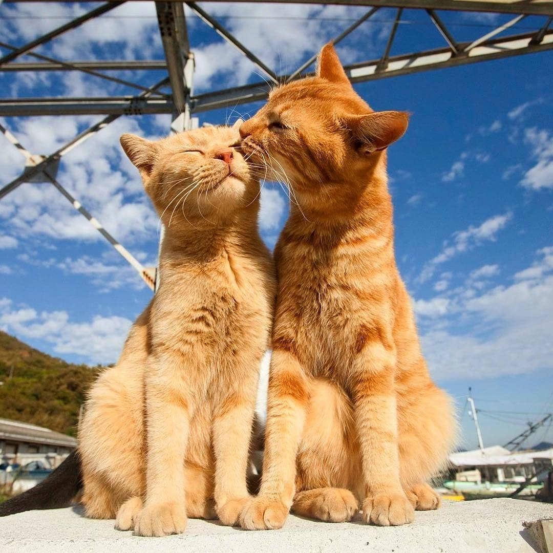 Like Follow Me If You Love Cat Meow Kittens Kitty Kitten Catlover Cats Cat Cute Cats Cats Kittens