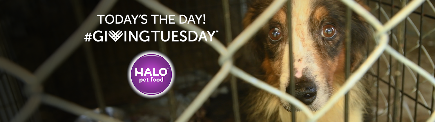 Celebrate Givingtuesday With The Humane Society Of The United
