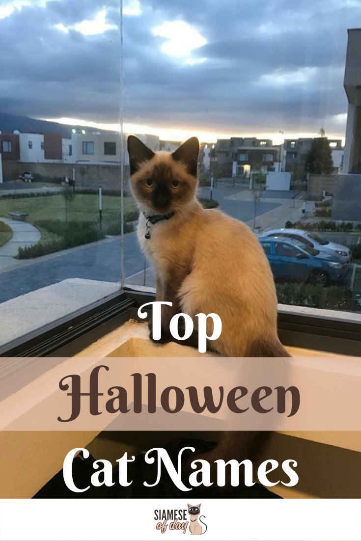 Top Cat Halloween Costumes For 2020 Siamese Of Day Halloween