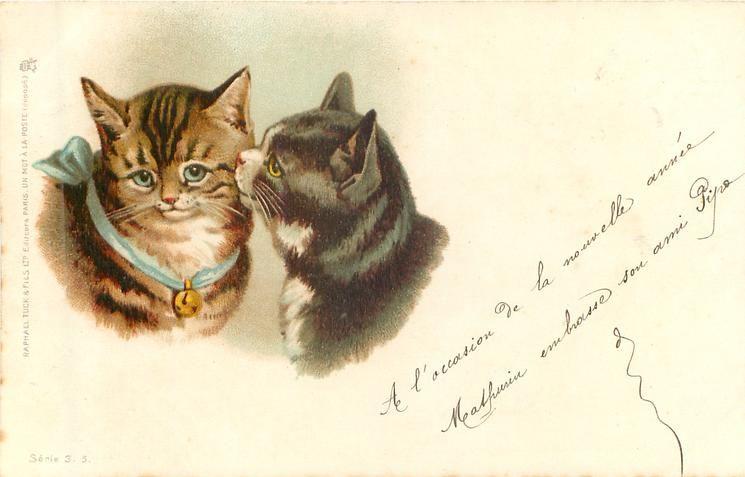 Советских, открытка винтажная коты