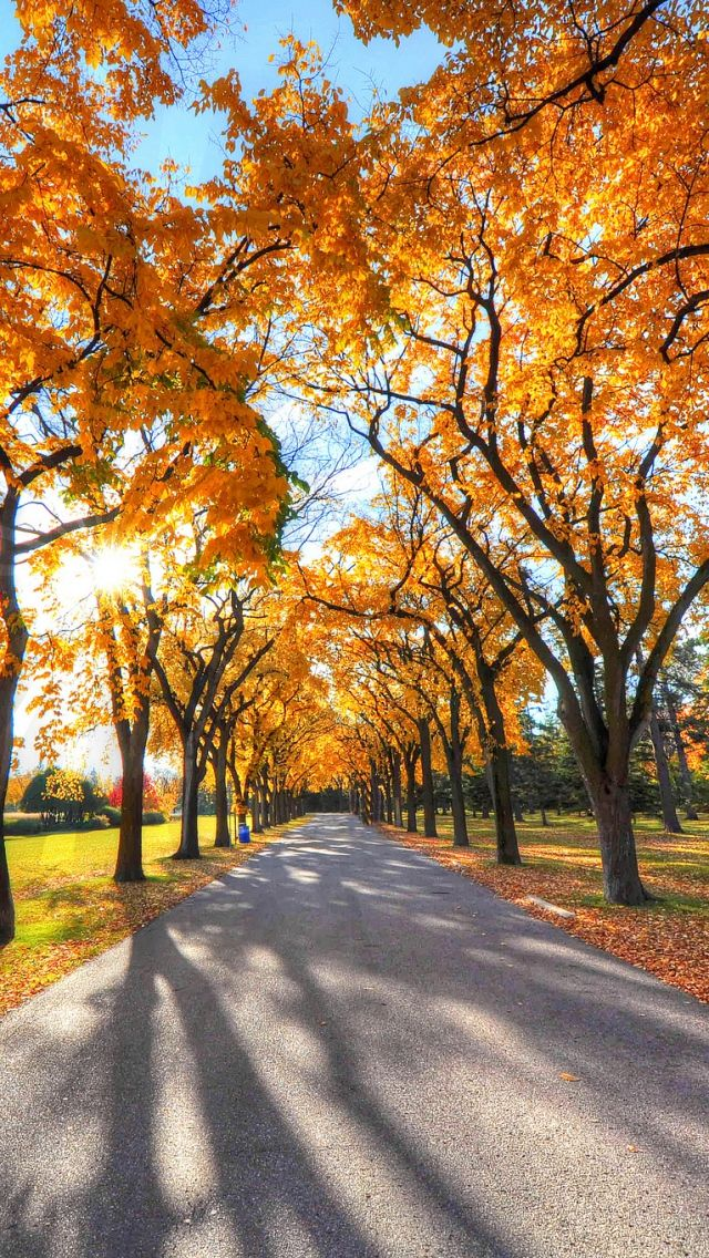 640x1136 Wallpaper autumn, alley, park, trees