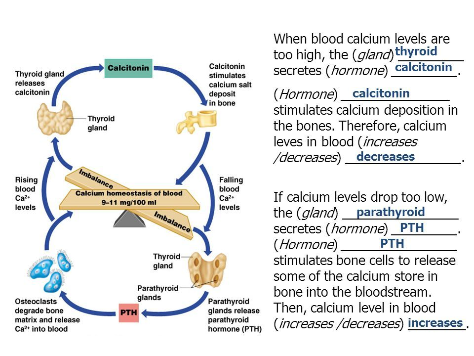 Calcium Homeostasis Flow Chart Awesome How A Negative Feedback Mechanism Works Ppt Video Onlin Dental Hygiene School Human Anatomy And Physiology Nursing Study