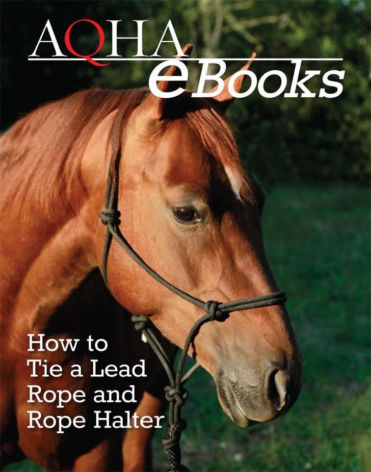 Aqha Horse Training Basics Leading Without Resistance Rope Halter Show Horses Aqha