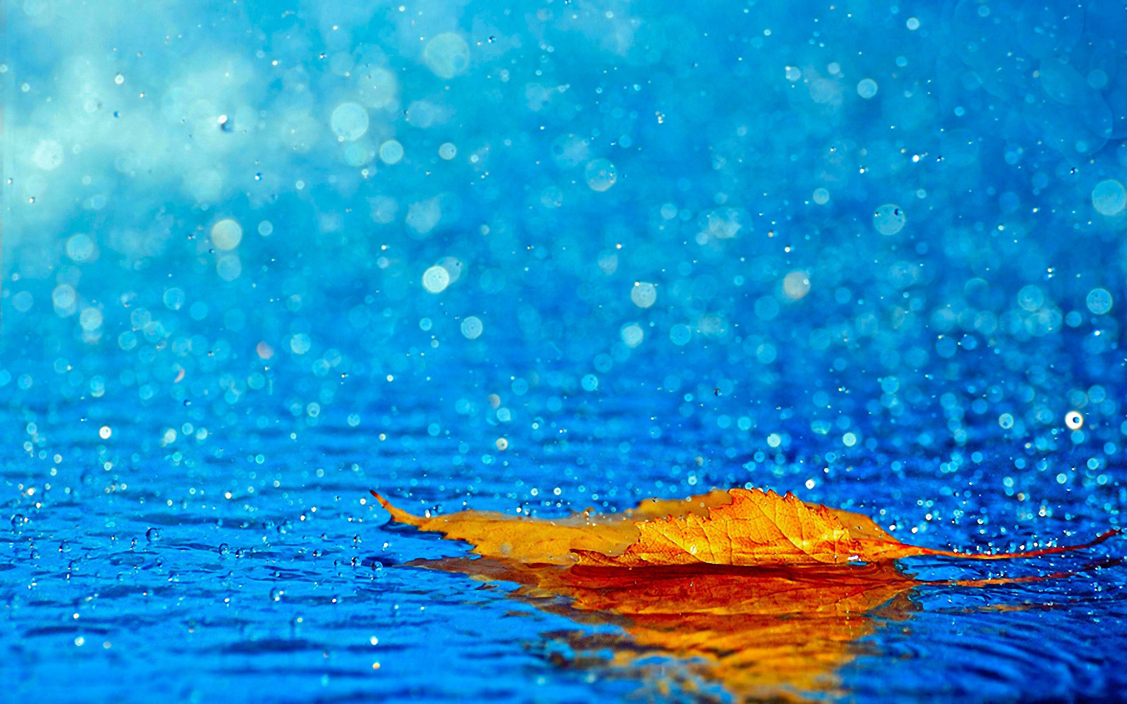 Terra/Natureza Folha Opus Colorful Nature Blue Pastel Rain