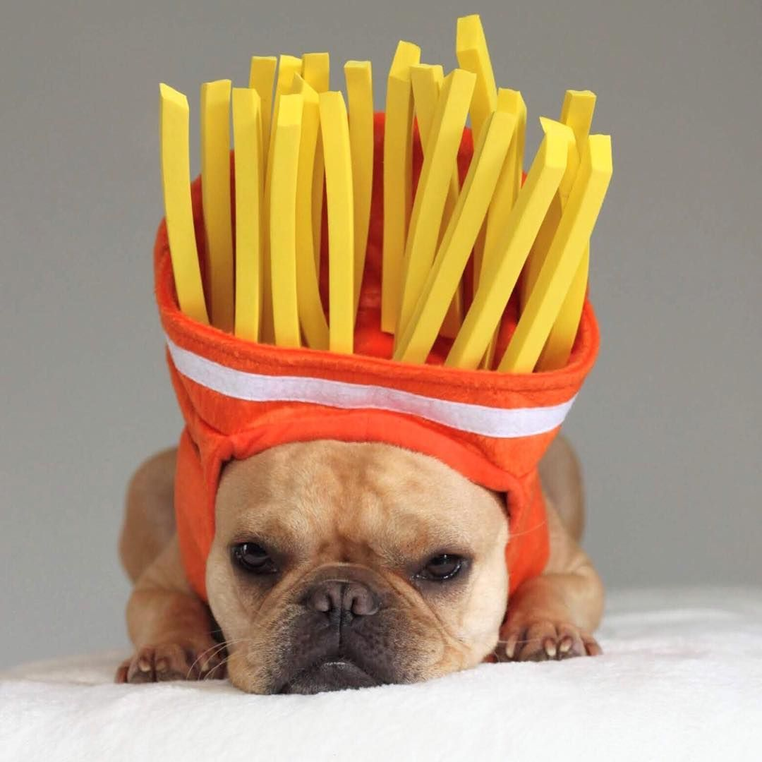 French Bulldog In French Fry Costume Dogsincostumes