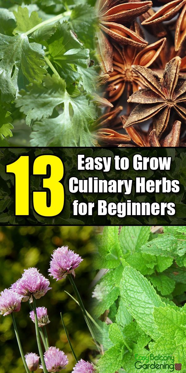13 Easy To Grow Culinary Herbs For Beginners Herbs 400 x 300