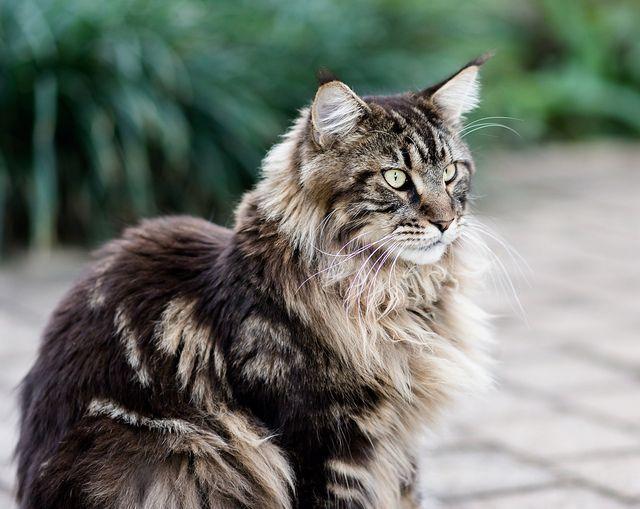Looks like my Harry Kitten..miss him!