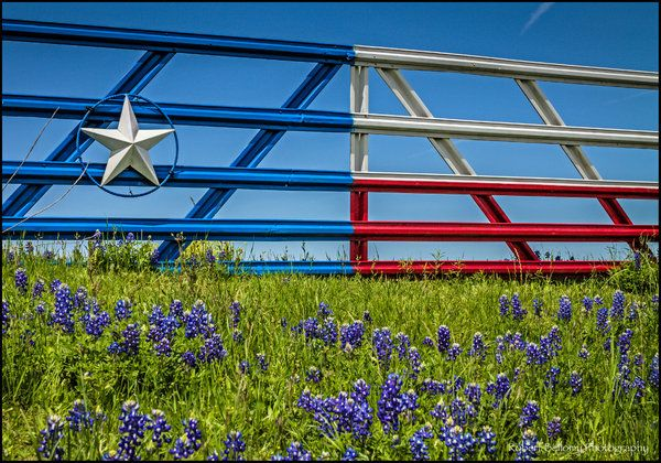 Texas Bluebonnets In Front Of A Nicely Painted Texas Gate Texas Flags Blue Bonnets Texas Bluebonnets