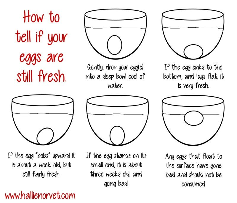 How to tell if your eggs are still fresh | Good To KNOW ...