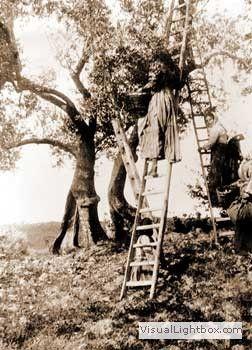 oasi masseria sant'elia: foto antiche | Old pictures ...