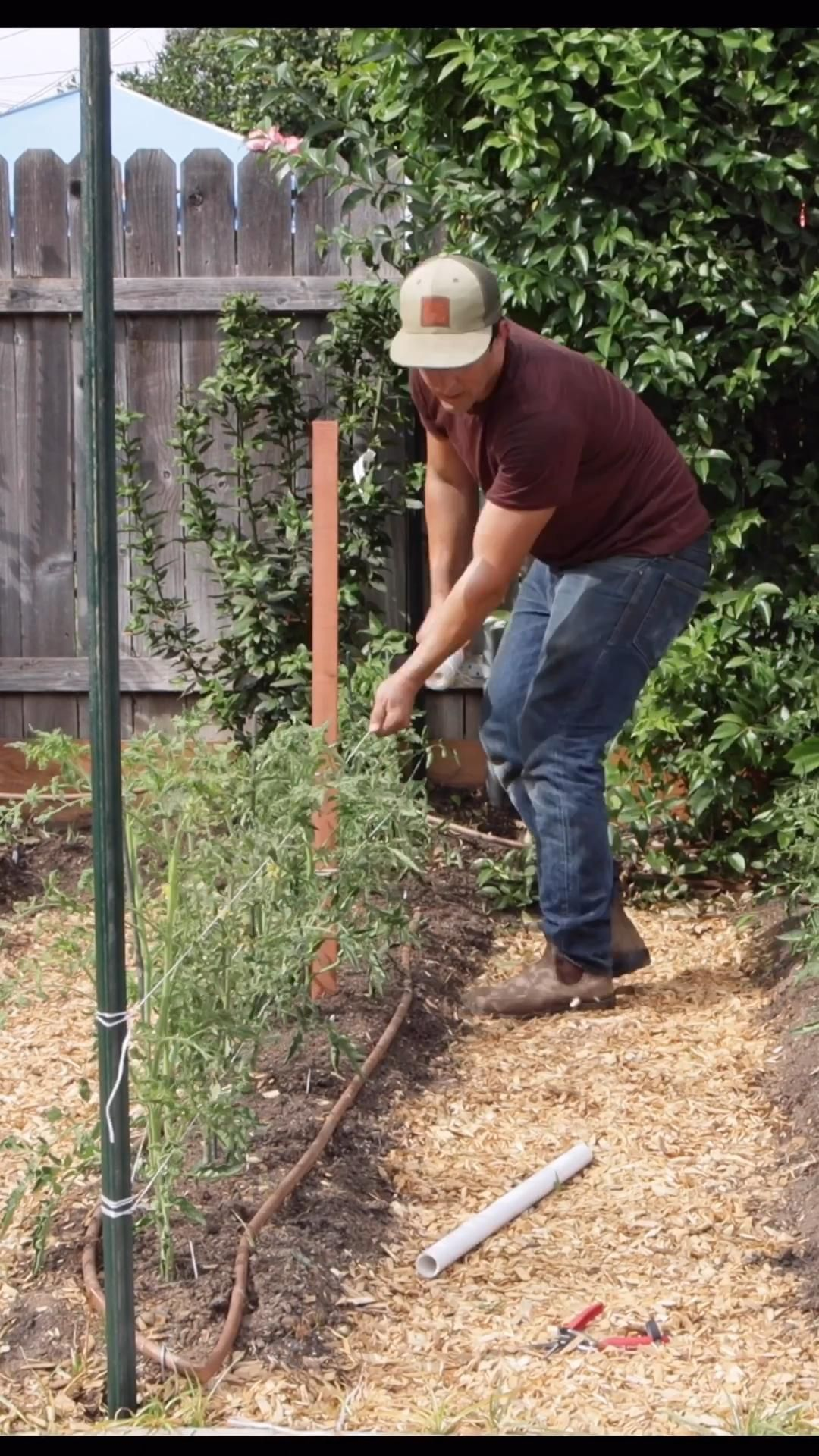 How to Stake & String Tomatoes with the Florida We