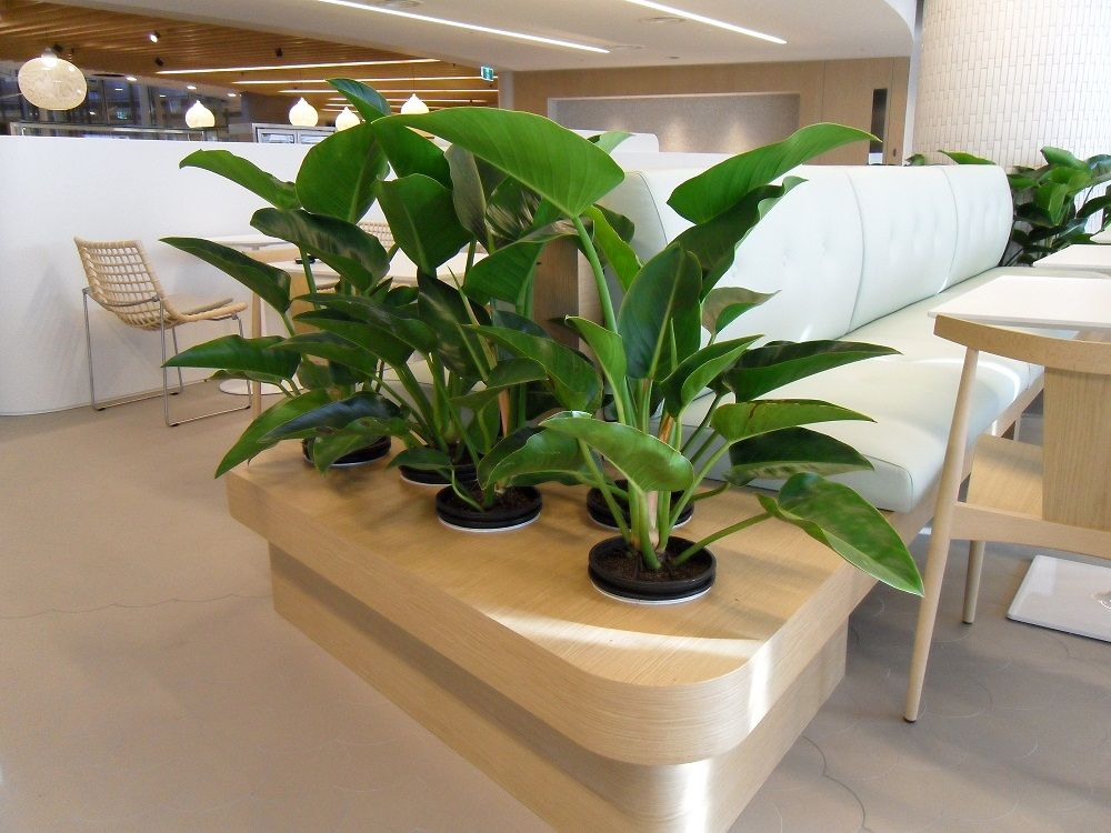 Office Plants Natural Wood