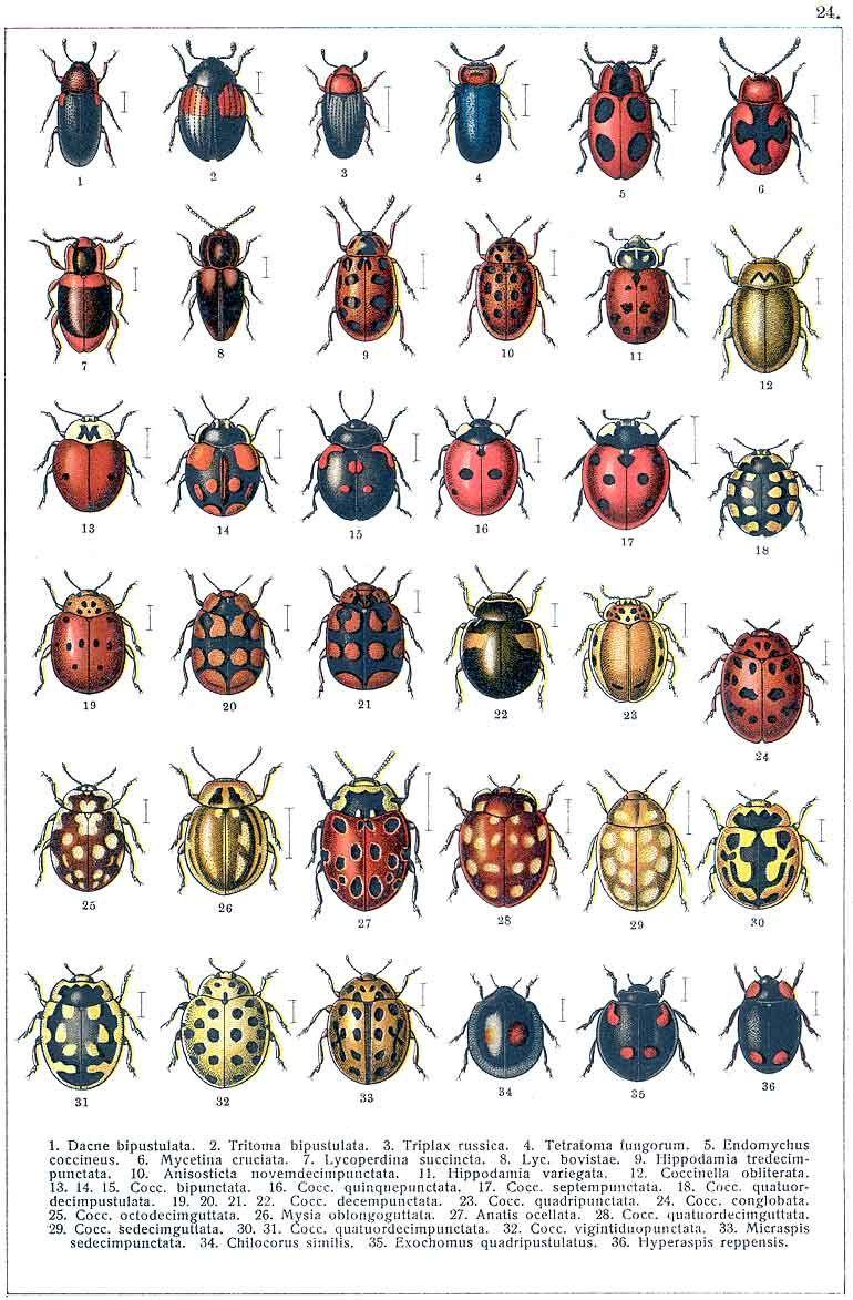 Классификация жуков в картинках, приколе картинки надписью