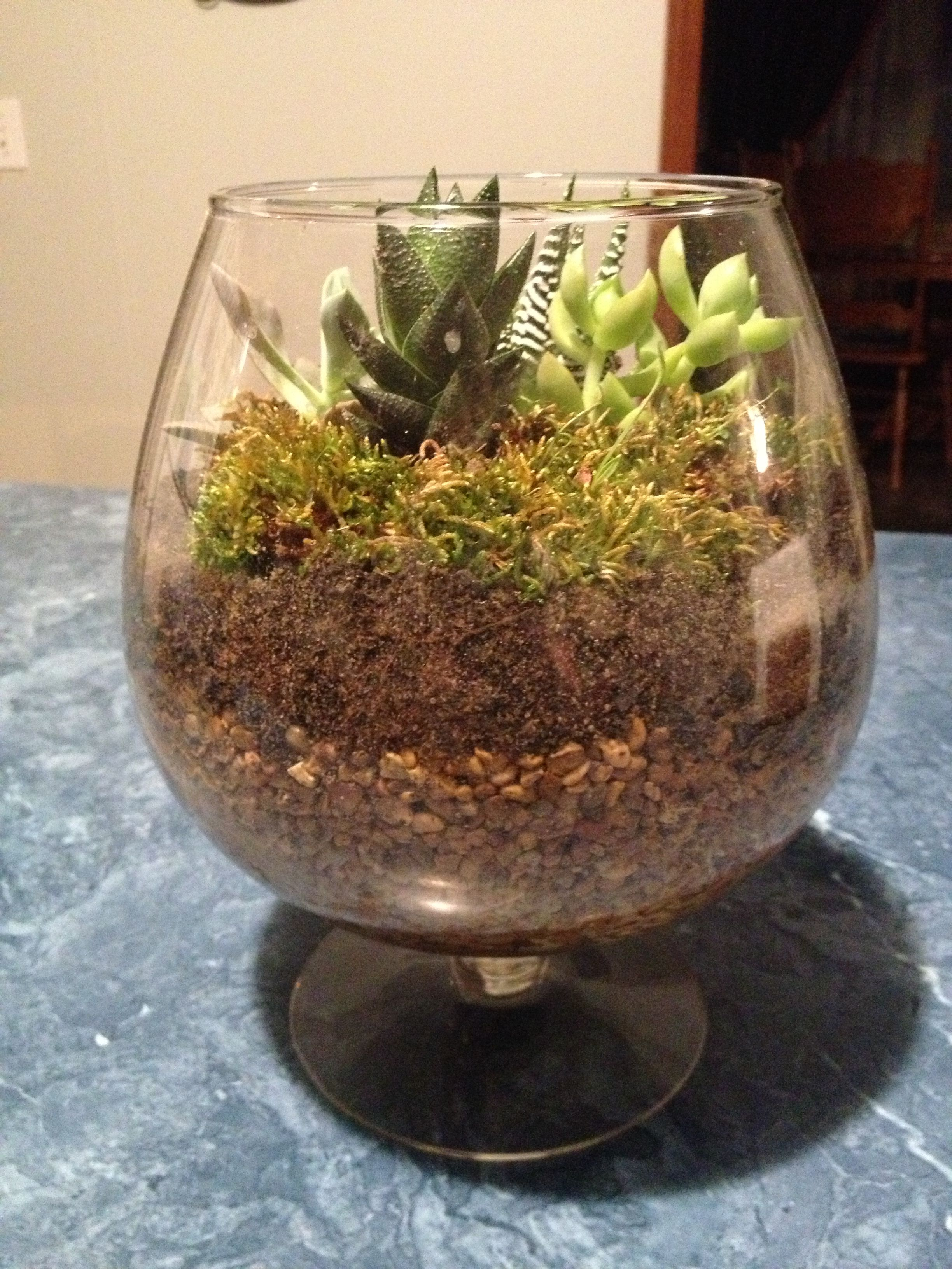 My succulent terrarium i layered my goodwill bowl with for Fish tank terrarium