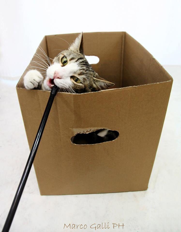 © copyright Marco. Con Gatto Poldo. Galli Marco il fotografo dei gatti CLICCA QUI https://www.facebook.com/ilgatto72?ref_type=bookmark
