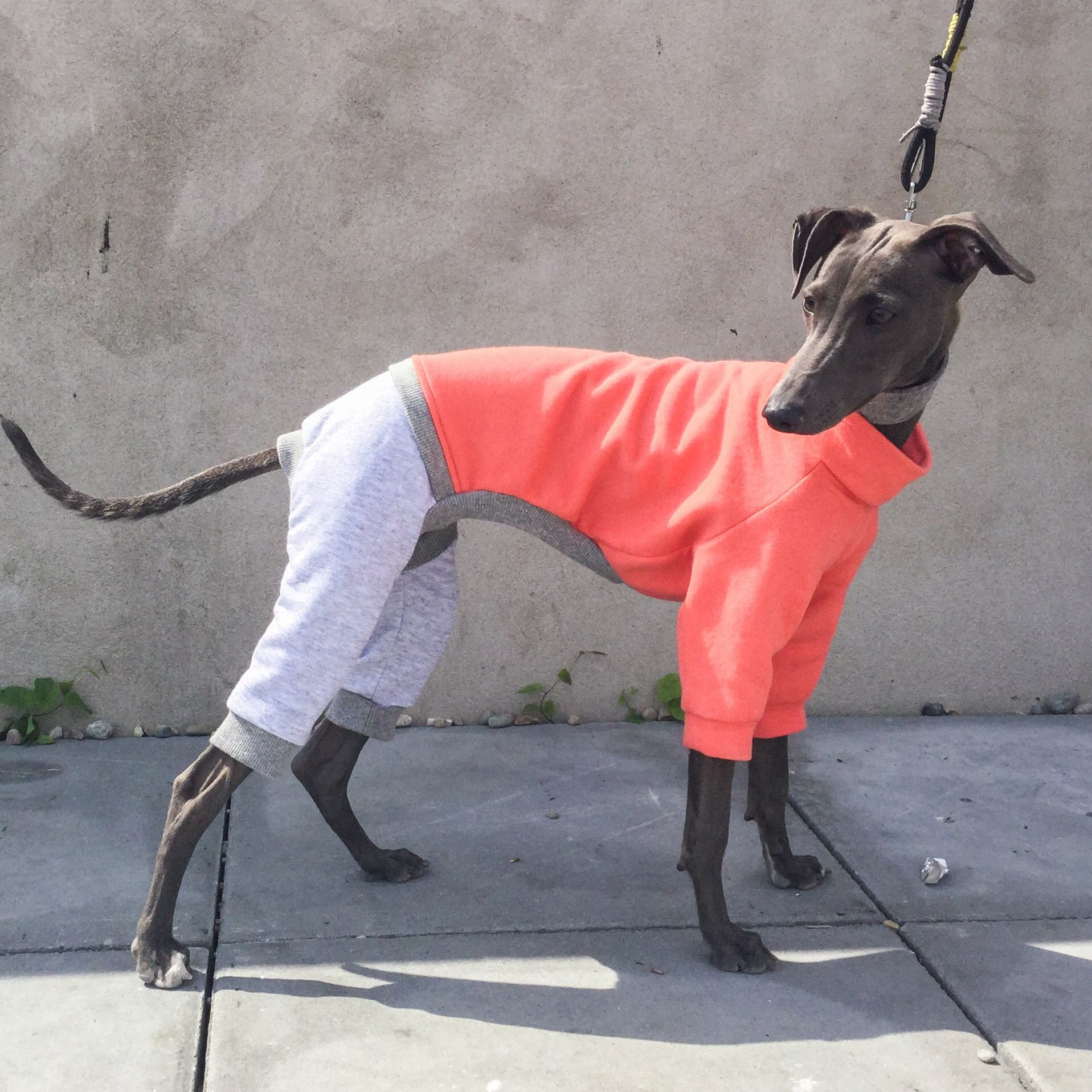 Italian greyhound clothing jumpsuit available here www italian greyhound clothing jumpsuit available here figsandpoppies bankloansurffo Images