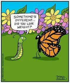 Pin by Sandy Kimzey on Monarchs Funny cartoon pictures