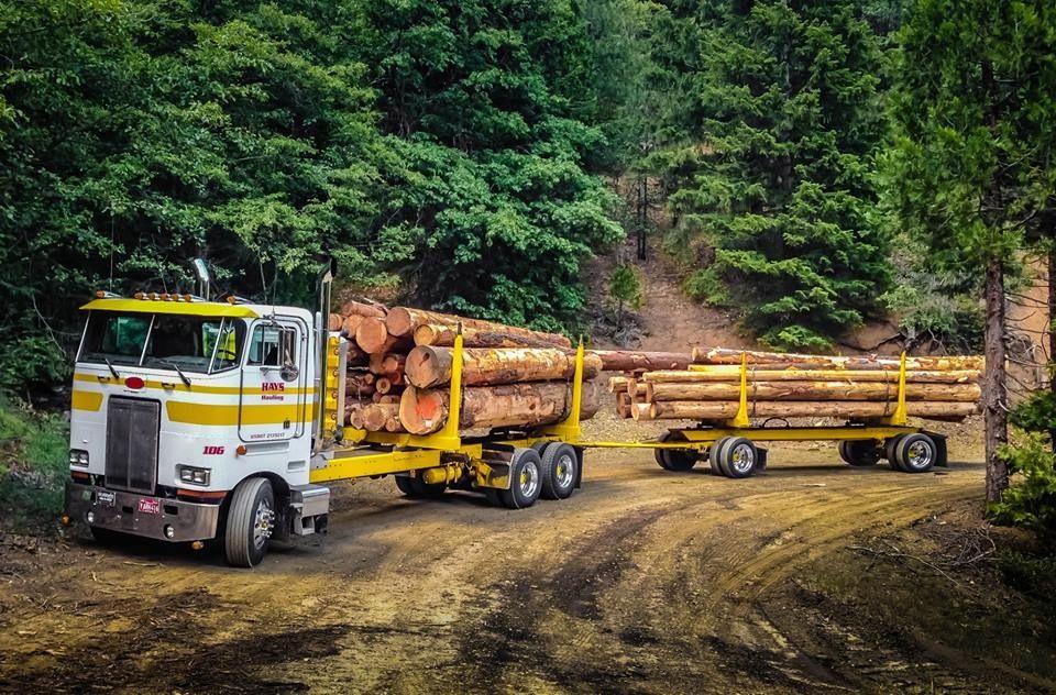 White and yellow COE Peterbilt log hauler